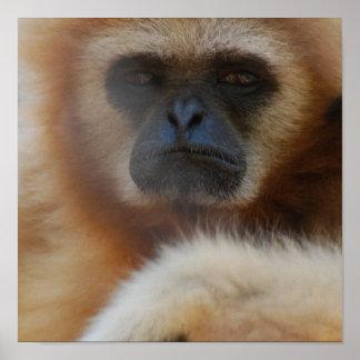Sad Gibbon Poster