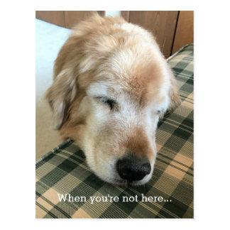 Sad Golden Retriever With Head on Chair Miss You Postcard