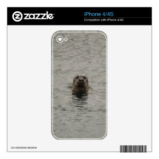 Sad Harbour Seal in the Rain Wildlife Art iPhone 4S Decals