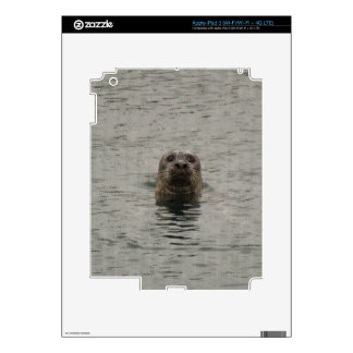 Sad Harbour Seal in the Rain Wildlife Art Skin For iPad 3