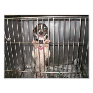 Sad Italian Greyhound Mix With Paws on Cage Photo Print