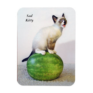 Sad Kitten on Watermelon Magnet Cat