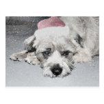 Sad little christmas dog postcard