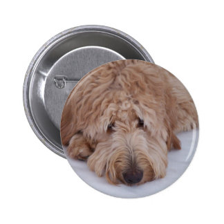 Sad, Lonely, Adorable, & Cute GoldenDoodle Dog Pinback Button