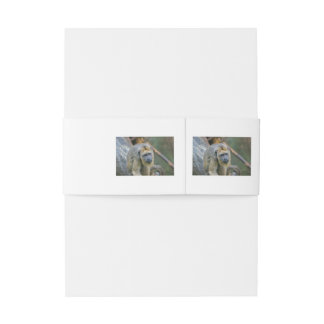 Sad Looking Howler Monkey Invitation Belly Band