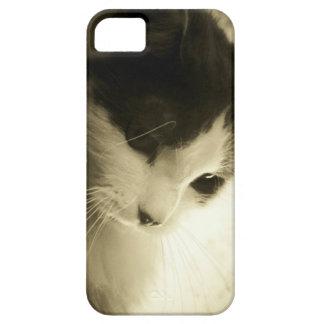 Sad Maine Coon Kitty iPhone SE/5/5s Case