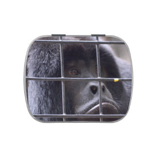 sad monkey in cage primate image jelly belly candy tins