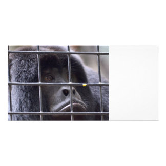 sad monkey in cage primate image photo card