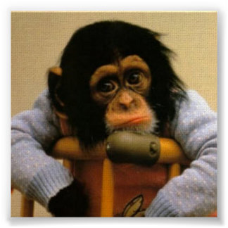 Sad monkey picture poster