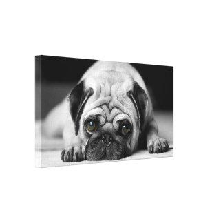 Sad Pug Canvas Print