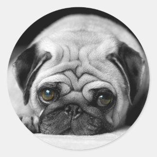 Sad Pug Classic Round Sticker