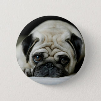 Sad pug - dog lying down - dog look - cute puppies button