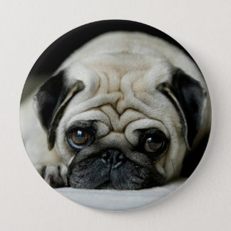 Sad pug - dog lying down - dog look - cute puppies pinback button