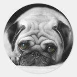 Sad Pug Stickers