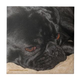 Sad Pug Tile