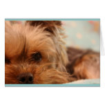 Sad Puppy Card