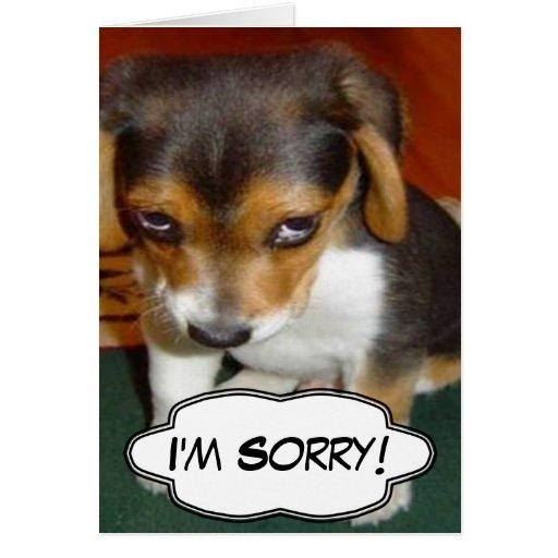 Im sorry dog face