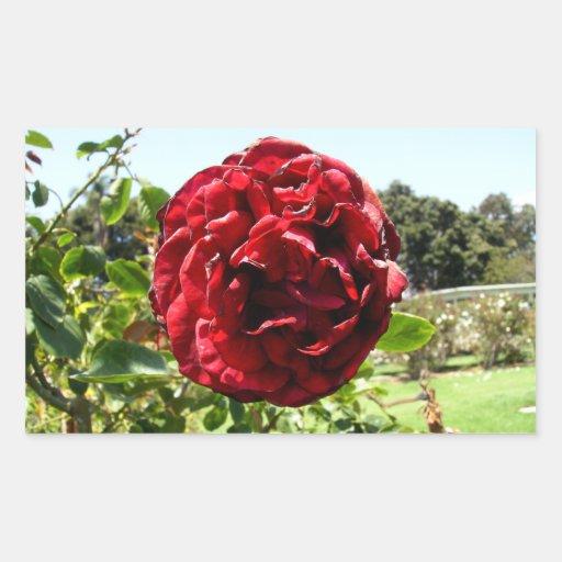 Sad Red Rose Rectangular Sticker