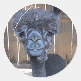 Sad Shaved Alpaca Classic Round Sticker