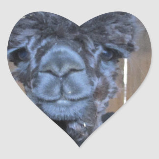 Sad Shaved Alpaca Heart Sticker
