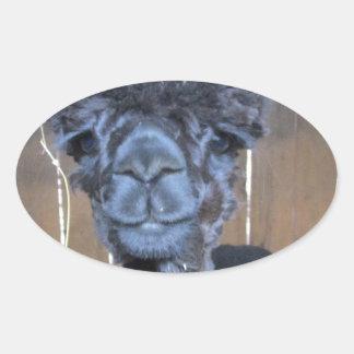 Sad Shaved Alpaca Oval Sticker