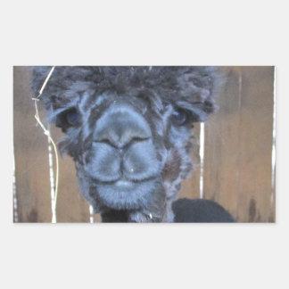 Sad Shaved Alpaca Rectangular Sticker