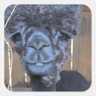 Sad Shaved Alpaca Square Sticker