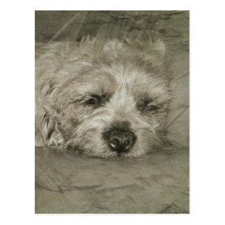 Sad sleepy dog postcard