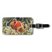 Saddle anemonefish luggage tag