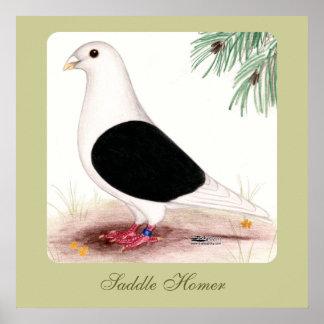 Saddle Homer Pigeon Poster