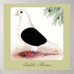 Saddle Homer Pigeon Posters