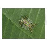 Saddleback moth, Acharia sp., poisonous Greeting Card