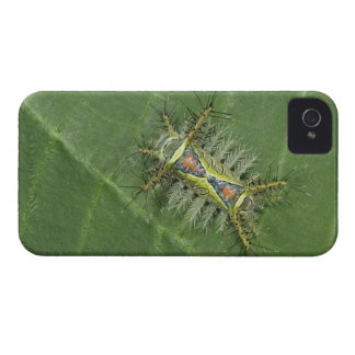 Saddleback moth, Acharia sp., poisonous iPhone 4 Case-Mate Case