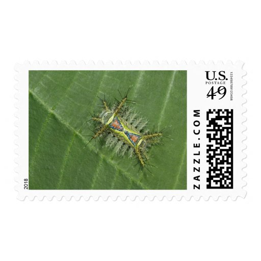 Saddleback moth, Acharia sp., poisonous Postage