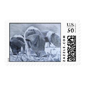 Saddleback piglets drawing postage stamps