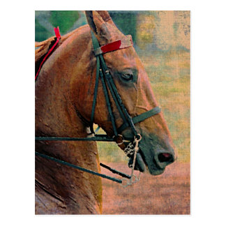 Saddlebred Faux Painting Post Cards