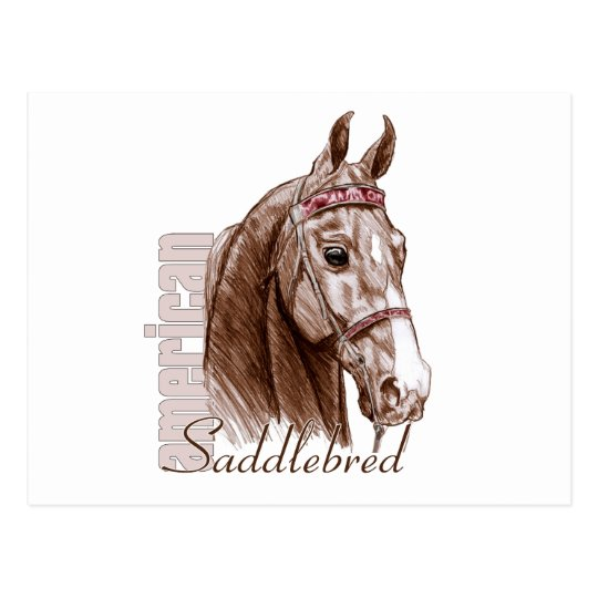 Saddlebred Head Study, Brown Postcard