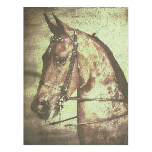 Saddlebred Horse Postcard