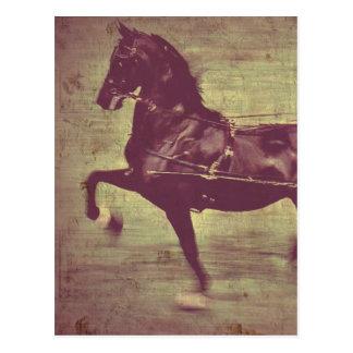 Saddlebred Song Post Cards