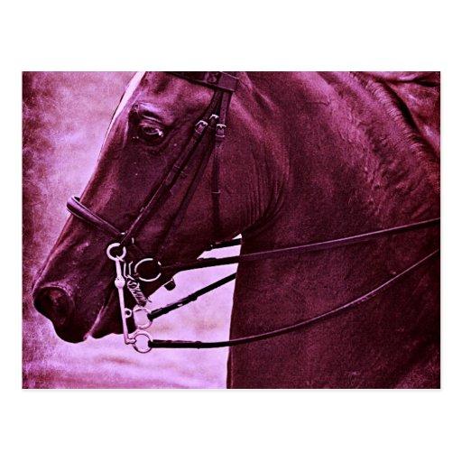 Saddlebred teñido postal