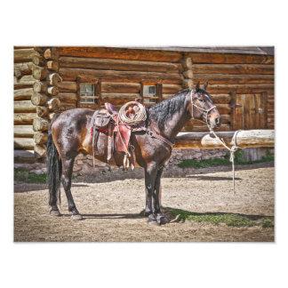 Saddled Horse - Horses - Ranch Photo Print