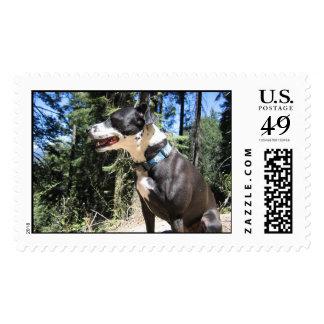 Sadie at Sequoia Nat'l Park Postage Stamps