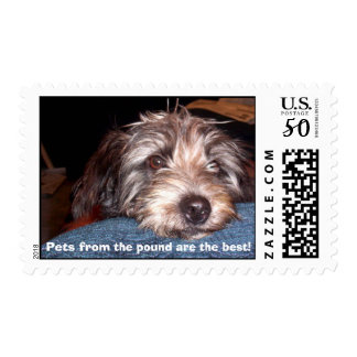 Sadie, Pets from the pound are the best! Postage