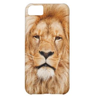 Safari África de rey Of The Jungle Face del león
