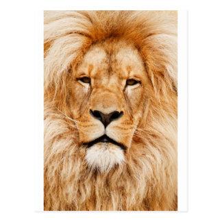 Safari África de rey Of The Jungle Face del león Postal