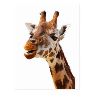 Safari Africa Jungle Giraffe Postcard