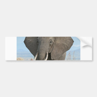 Safari African Jungle Destiny Animals Elephants Bumper Sticker