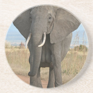 Safari African Jungle Destiny Animals Elephants Coaster