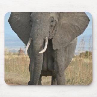 Safari African Jungle Destiny Animals Elephants Mouse Pad