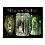 Safari africano tarjetas postales